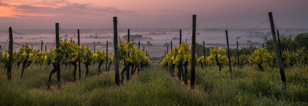 photo-wineyard